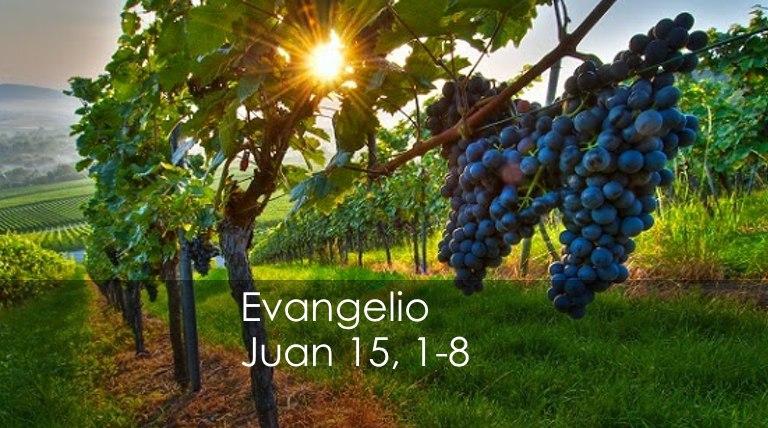 Juan 15-1-8