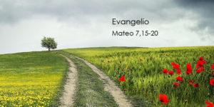 Mateo-7,15-20