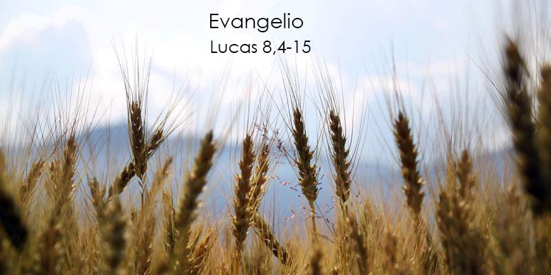 Lucas-8,4-15